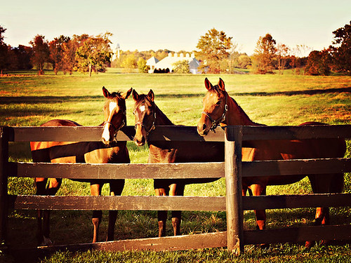 autumn trees light sunset horse brown sun house 3 building fall home field yellow barn fence gold golden virginia three haze farm echo historic foliage glorious pasture va heads homestead curious stable middleburg collaboration foals chrysti christyhydeck hickorytreefarm