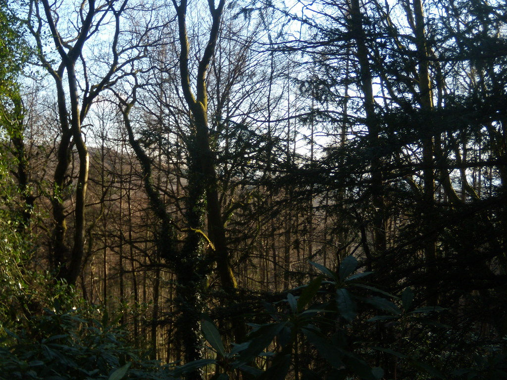 Trees , view and rhoododendron DSCN8295 Haslemere Round Walk