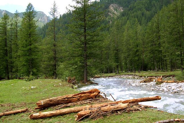 Troncs et torrent - Mercantour (Alpes-Maritimes)