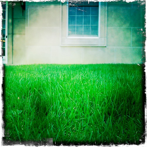 green grass iphone 365pix johnslens iphoneography hipstamatic kodotverichromefilm