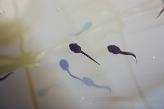 Tadpoles   by Timmo