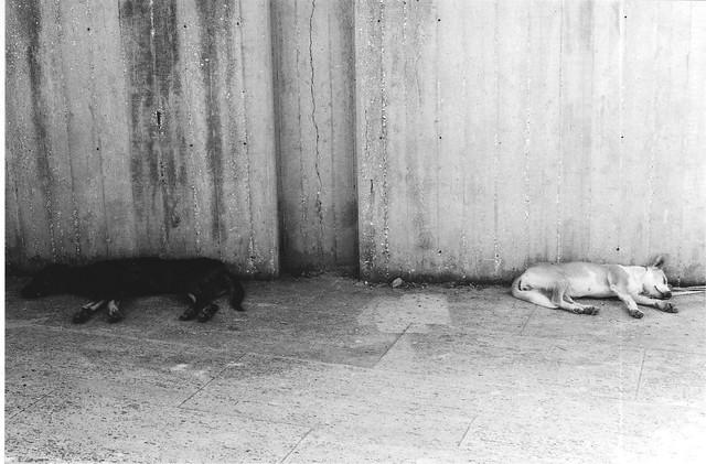 Black and White... sleeping
