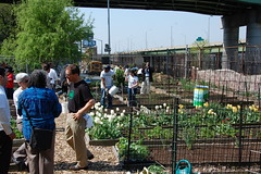 Volunteers Plant Flowers at Riverside Valley Community Garden