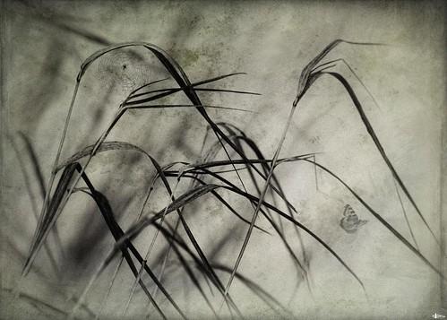 canada novascotia capebreton grasses textured cs4 ghostworks skeletalmess niksfilters