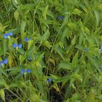 Flower_20090906 - 4