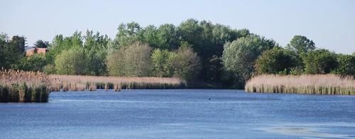 north-pond1
