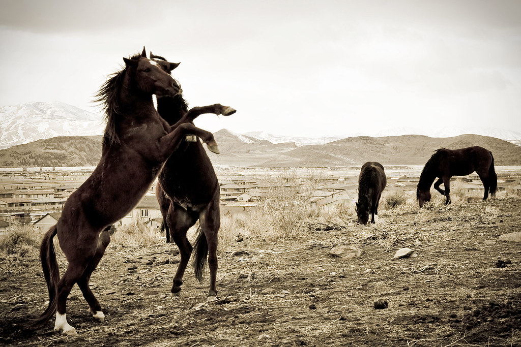 In All Their Glory - Nevada's Wild Horses by {photonista} Rachel Hamrick