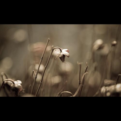 Untitled | by Ben Fredericson (xjrlokix)