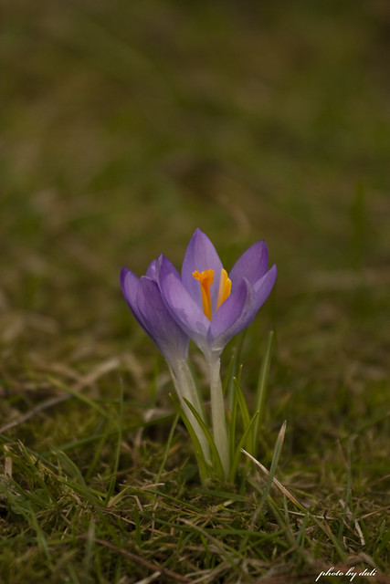 Little flower in early spring