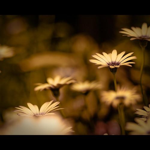 flower macro canon eos 100mm tokina f28 brooksidegardens letitbe 500d t1i