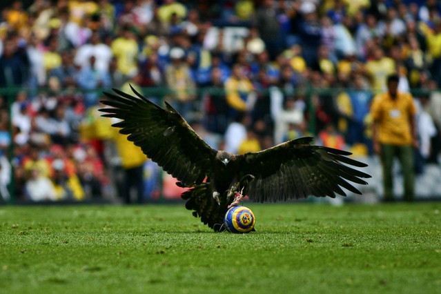 Vuelo Aguila. Estadio Azteca | carl vargas | Flickr