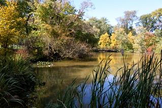 (1) Hall's Pond Sanctuary, Brookline, MA | by kenmqz