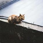 _貓步躡躡。