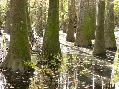 honeyislandswamp