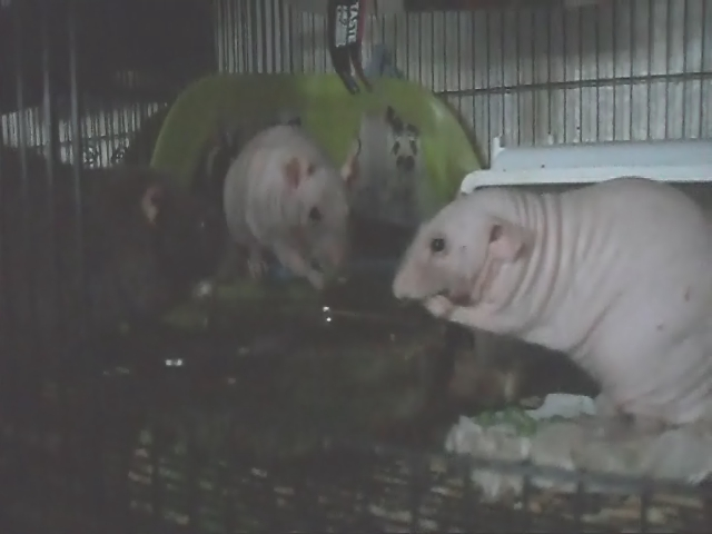 My Boys Eating Peas ~ with Surprise From Bubba at the end!