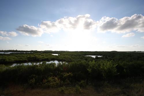 nature outdoors louisiana trail creole lakecharleslanature