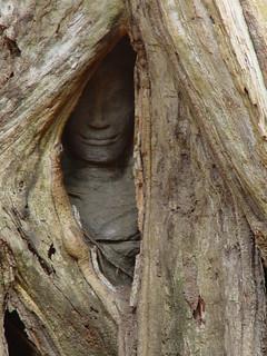 Thiep Prahm Face in Roots