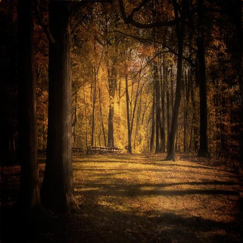autumn fall d200 autumninnyc wanilton tibbettesbrookpark yonkeres