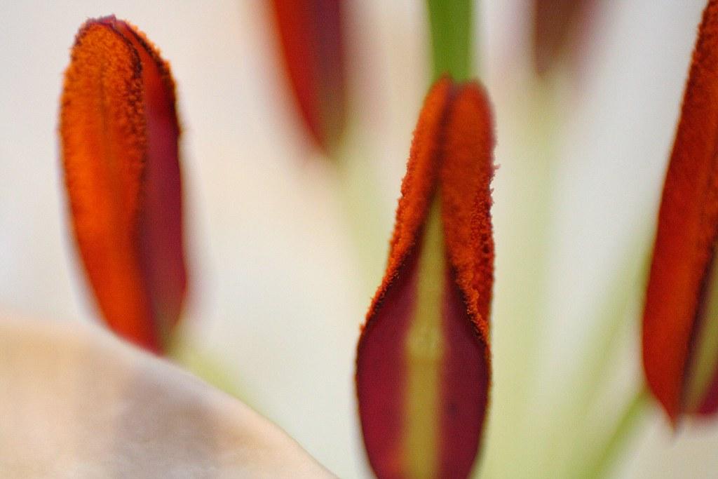 Porno flower