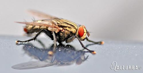A fly | by ALZURBA, E