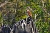 Madagascar kestrel on Tsingy by Louise Jasper