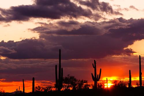 Saguaro Glow | by caddymob