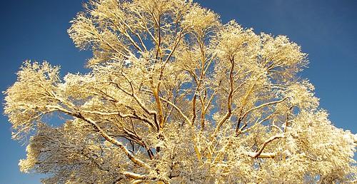 snow newmexico santafe tree sunrise pentax goldenhour elreyinn project365 k2000