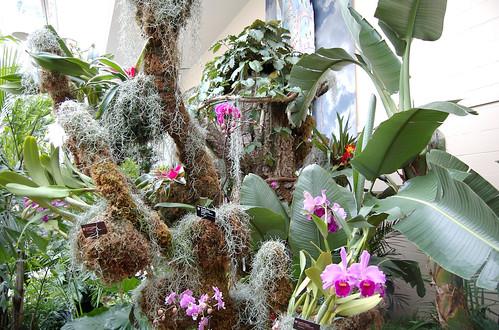 Orchid show missouri - Orchid show missouri botanical garden ...
