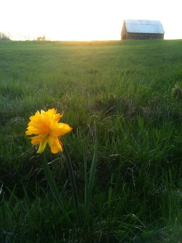 sunset ohio flower zanesville iphone
