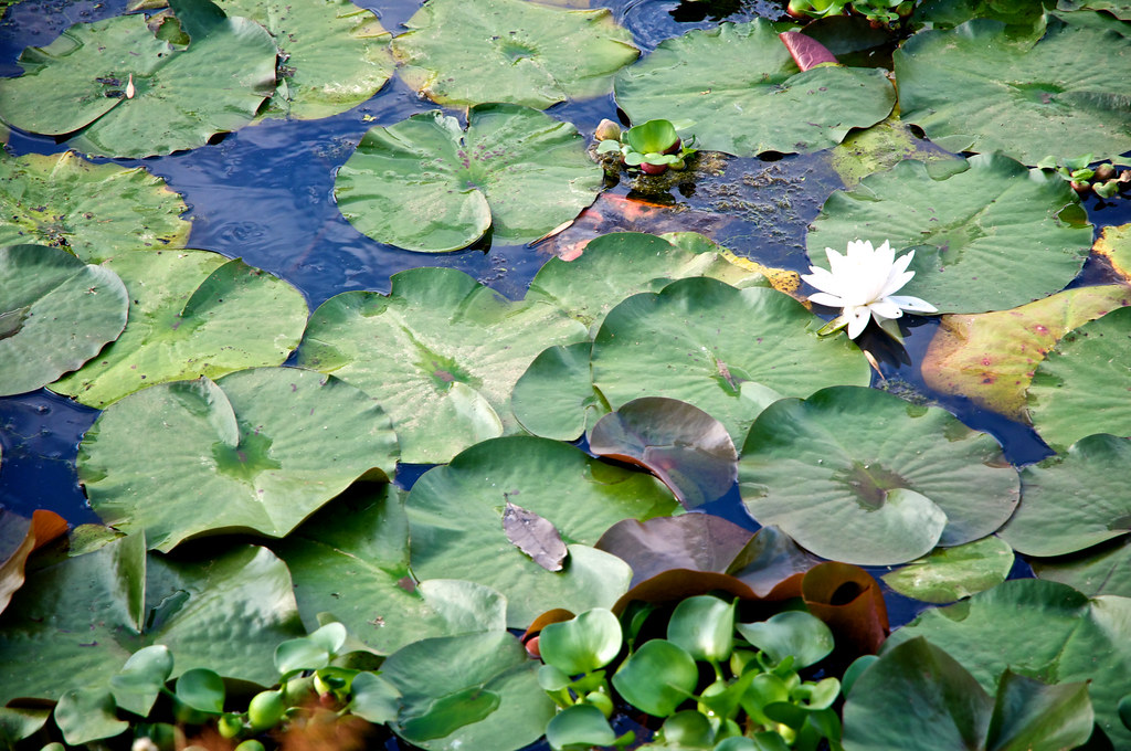 Kenilworth park and aquatic gardens cleanup event flickr - Kenilworth park and aquatic gardens ...