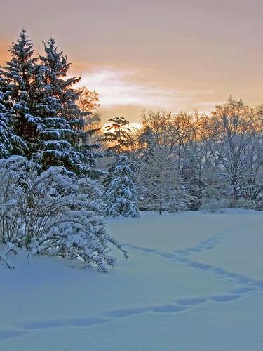 ohio sunrise cleveland stayingalive heavysnow kirtland holdenarboretum deertrail bluemorninglight lanterncourt twofeetoffreshpowder