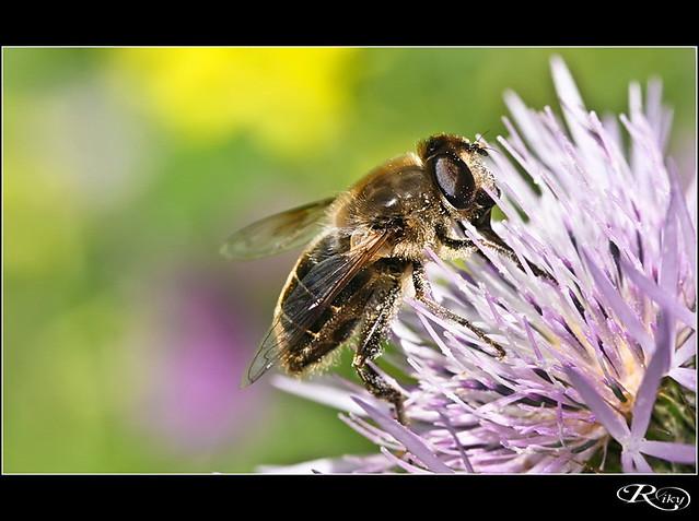 ¡¡¡ Ummm...Que rico el polen...!!!