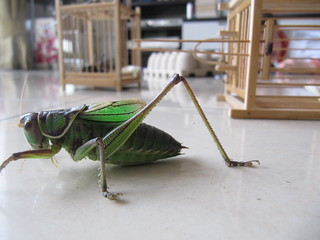 Pet Crickets Try to Escape! | by http://klarititemplateshop.com/