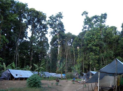 Thu, 04/01/2010 - 12:51 - Camp. Credit: CTFS