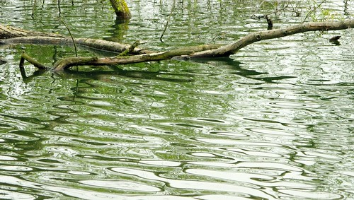 Inspirational ripples