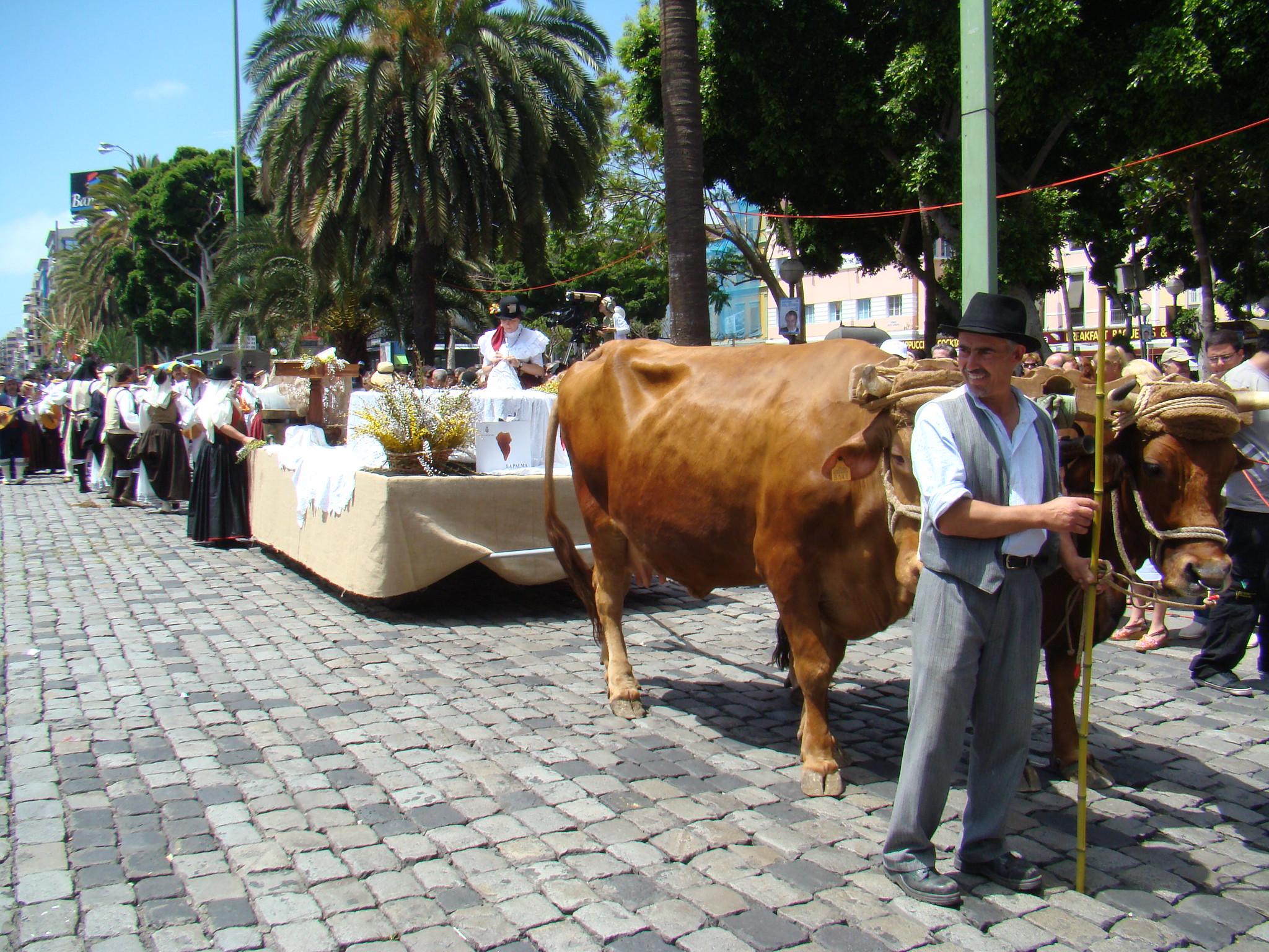 Romeria en Las Palmas de Gran Canaria 2009