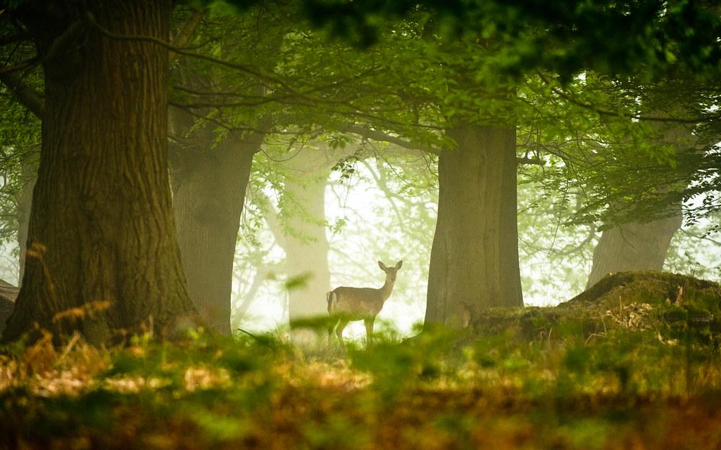 Встреча в лесу картинка