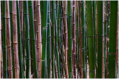 bamboo rhodeisland charlestown 4real bambooforest umbrellafactory interestingness295 perceptionvsreality nikond300 4bc moremetaphor soimportanttolookaround andseewhatyouhave