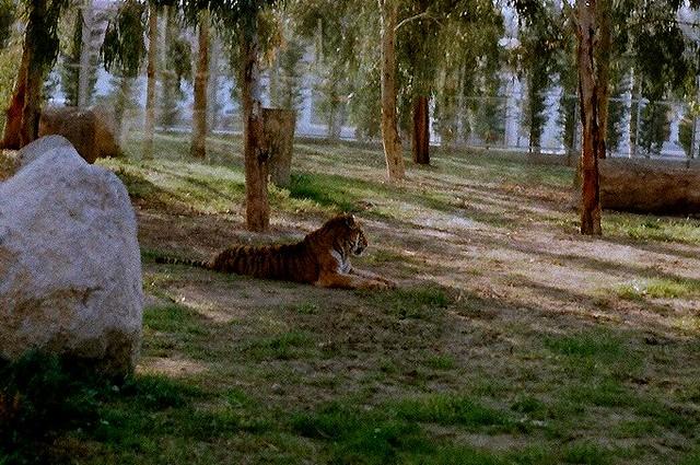 izmir Wildlife Park 15