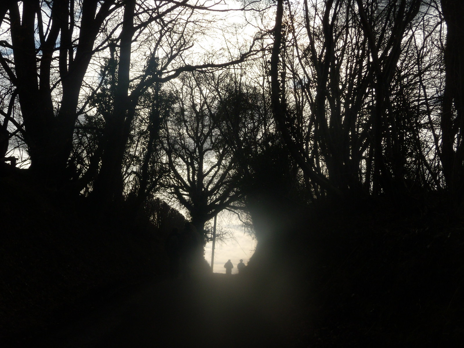 Silhouettes Balcombe round (winter)