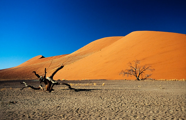 The last tree of the Namib desert