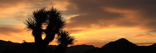 california sunrise 50mm desert joshuatree joshuatreenationalpark blackrockcampground