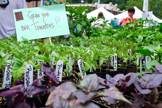Tomato Plants on Sale | by fairfaxcounty