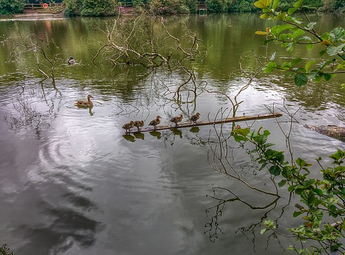 Five Little Ducks (25/05/2015)