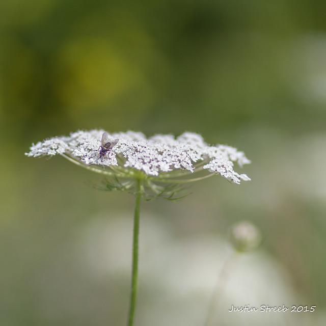 NY Weeds 1