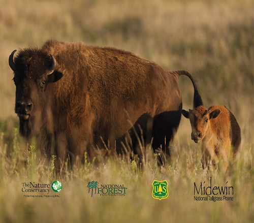 Midewin Bison Project