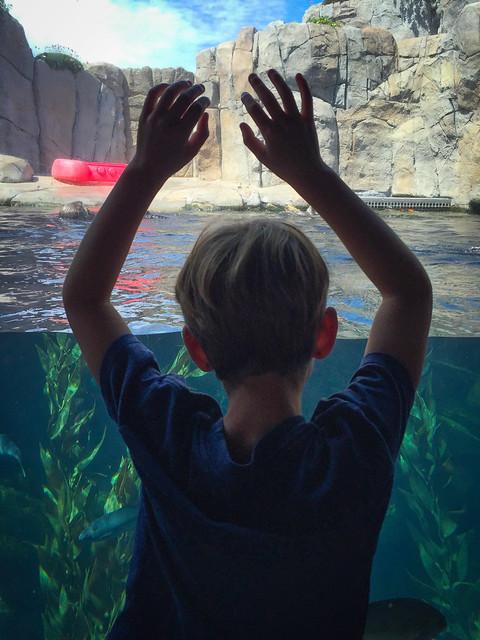Monterey Bay Aquarium 3231