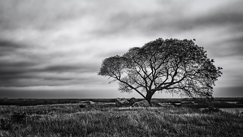 bw blackwhite blackandwhite branches coastal estuary grass lowtide marsh marshland monochrome oquinnestuary saltmarsh seagrass tidal tree water wetlands hitchcock texas unitedstates us