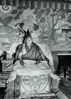 Muli king | by jiulong