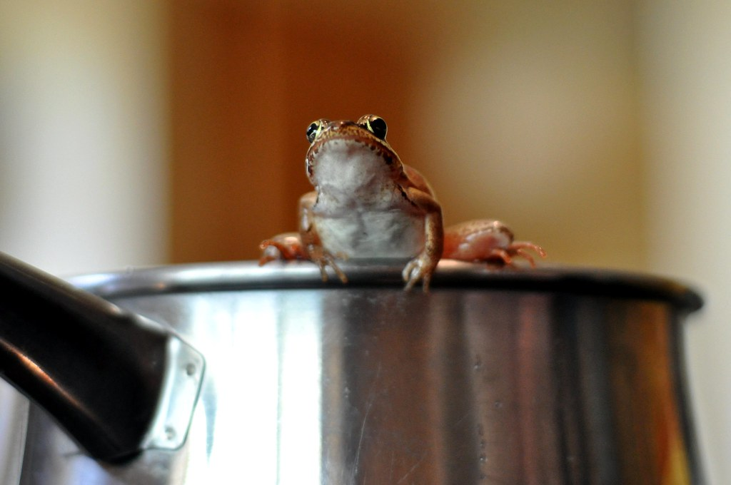 Image result for frog in the pot